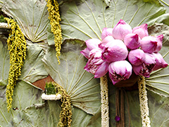 บัว ดอกไม้ไทยที่สวยไม่แพ้ใครในโลก